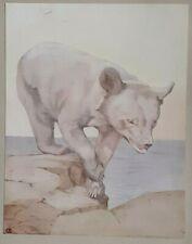 BEAR CUB - 1911 Print By DETMOLD