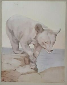 BEAR CUB - 1911 Print By DETMOLD