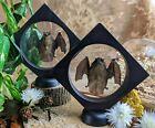 Z24A Taxidermy lesser bamboo Bat Floating display Oddities Curiosities decor