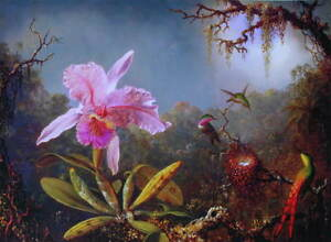 Orchids and Hummingbirds 3 by Martin Heade vintage art