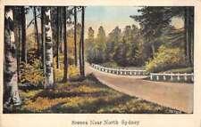 North Sydney Greetings Scenic Drive Antique Postcard J76620
