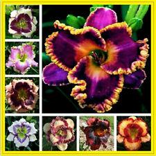 Bunte Daylily Lilien Samen Seltene Pflanzen Blumensamen Bonsai Garten (10 stück)
