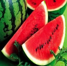 FD805 Rare Sweet Watermelon Seeds Fruit Garden Seed ~Red~ 10PCs Free Shipping