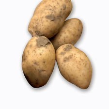 Seed Potatoes Maris Peer Salad Second Crop 20x Allotment Grow Your Own, Quality