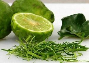 THAI KAFFIR LIME 10 SEEDS, Fragrant & Organic Source of Lime Leaves for Cooking