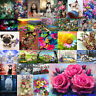 5D DIY Diamond Painting Colorful Flower Cross Stitch Embroidery Mosaic Art Decor