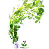 Moneywort Bacopa Monnieri Bundle B2G1 Stem Live Aquarium Plants Tank Backgrond
