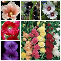 Double Hollyhock Bonsai Seeds Plants Flower Color Mixed 100pieces//lot