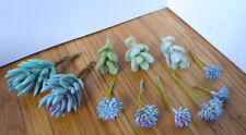 11 Pieces Artificial Mini Plants Gray Flocking Grass Plants Blue Succulents