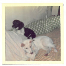 Square Vintage 70s PHOTO Black & White Dogs On Bed