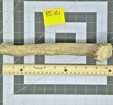 Large Real Whole Elk Deer Antler for Dog Chew Bully Stick Rawhide Alternative