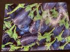tempered+glass+cutting+board+151%2F2+X+11+1%2F4+Inch.+Beautiful+Farmers+Market+Photo