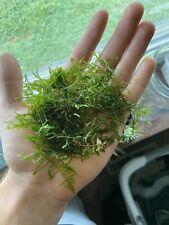 Peacock moss, live aquarium plant, Big handful