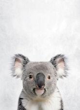 KOALA BEAR * QUALITY CANVAS PRINT