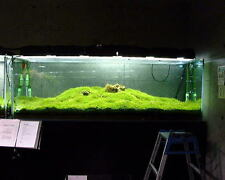 Java Moss-for Aquarium Live Plant Fish Tank Breeding