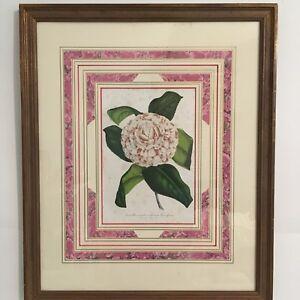 Pink Camellia Antique Lithograph 1860 Botanical Print Bernard Leon Verschaffelt