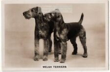 Welsh Terrier Dog Canine Pet Animal 1930s Trade Ad Card