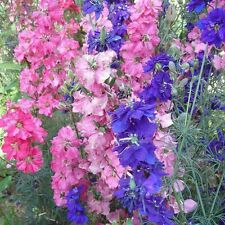 100 Delphinium Seeds Bonsai Flower For Home Garden Ornamental Plant Sement S063