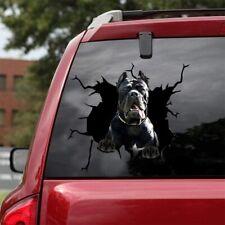 "Cane Corso Crack Car Sticker, Windows Car Decal, Dog Funny Decal 3D 12x12"""