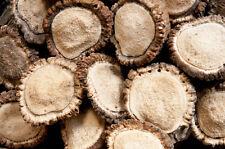 Assorted Elk Antler Burrs / Rosettes - Sm-Med - 1lb Bag - Craft Antlers - Burr