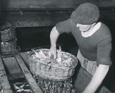 CIBOURE-SOCOA c. 1935 - Sardinerie Ouvrier Pyrénées-Atlantiques - DIV 9366