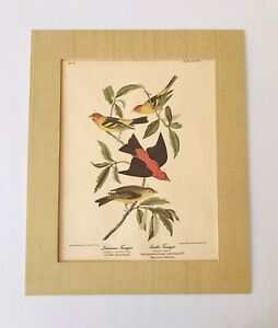 1837 N°71 Louisiana & Scarlet Tanagers JJ Audubon R Havell Reproduction? Print