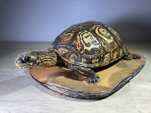 Vintage Taxidermy Turtle with Shell Head Legs and Tail on Mount / Base