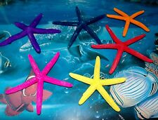 "SIX (6) 4"" to 6"" DYED PHILIPPINE FINGER STARFISH SEA SHELL  BEACH DECOR CRAFT"