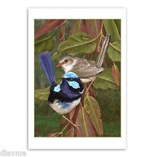 © ART - Australian Superb Blue Fairy Wren Bird Original nature print by Di