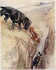 LABRADOR NOIR Springer Spaniel DE CHASSE CHIEN 1947 Art annonce imprimé G VERNON