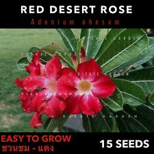 Red Desert Rose, Adenium obesum, ชวนชม x 15 Seeds