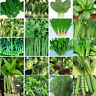 Heirloom Garden vegetable seed Non-GMO seeds bank survival organic plant Variety