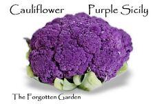 Cauliflower Purple Sicily Seed 25 Seeds Heirloom Garden Vegetable Italian
