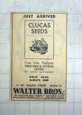 1949 Walter Brothers Of Worthing Pedigree Line Seeds