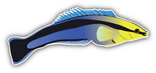 Bluestreak Cleaner Fish Car Bumper Sticker Decal 6'' x 3''