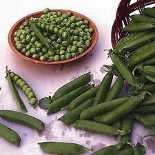 50 Alaska  peas.Earliest of the peas. HEIRLOOM. ***SAME DAY SHIPPING***