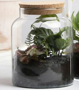 Halboffene Terrarium Flasche Glas 5L Pflanzen Deko Gewächs Haus Blumen Kork Haus