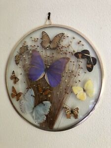 Beautiful Art Deco Vintage Butterfly Wing Picture 34cm Diameter