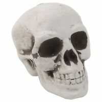 Mini Plastic Human Skull Decor Prop Skeleton Head Halloween Coffee Bars Ornament