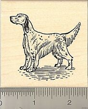 English Setter Posing Rubber Stamp H8403 Wood Mounted