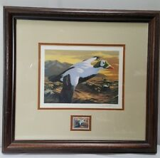 1993 Spectacled Eider Migratory Bird Hunting Stamp Framed Print 4473/10500