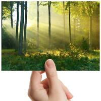 "Sunlit Forest Sun Flare Nature Small Photograph 6""x4"" Art Print Photo Gift #8576"