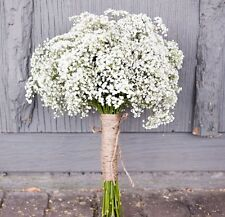 Baby's breath Gypsophila elegans 1000 seeds *Cut flower * Fast Easy Grow CombSH