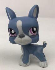 LPS Littlest pet shop Grey & White Boston Terrier Puppy #1025 Purple Eyes dog
