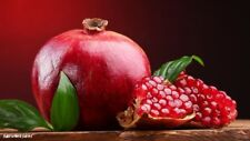 Giant Pomegranate Seeds Home Plant Bonsai Delicious - 100 Seeds