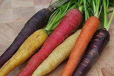 Carrot Rainbow Blend 10 Varieties Nutritious Antioxidant 200+ Organic Seeds