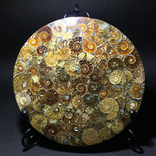 Natural Ammonite Disc Fossil Conch Specimen Healing +Stand 1PC 100g+ QQ119