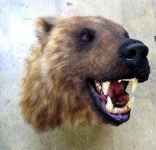 Taxidermie ours brun trophée factice taille réelle