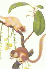 Animal Postcard - Bua Tambe   AB1166