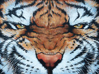 Tiger Eyes by pollard 8x10 signed art print game room man cave